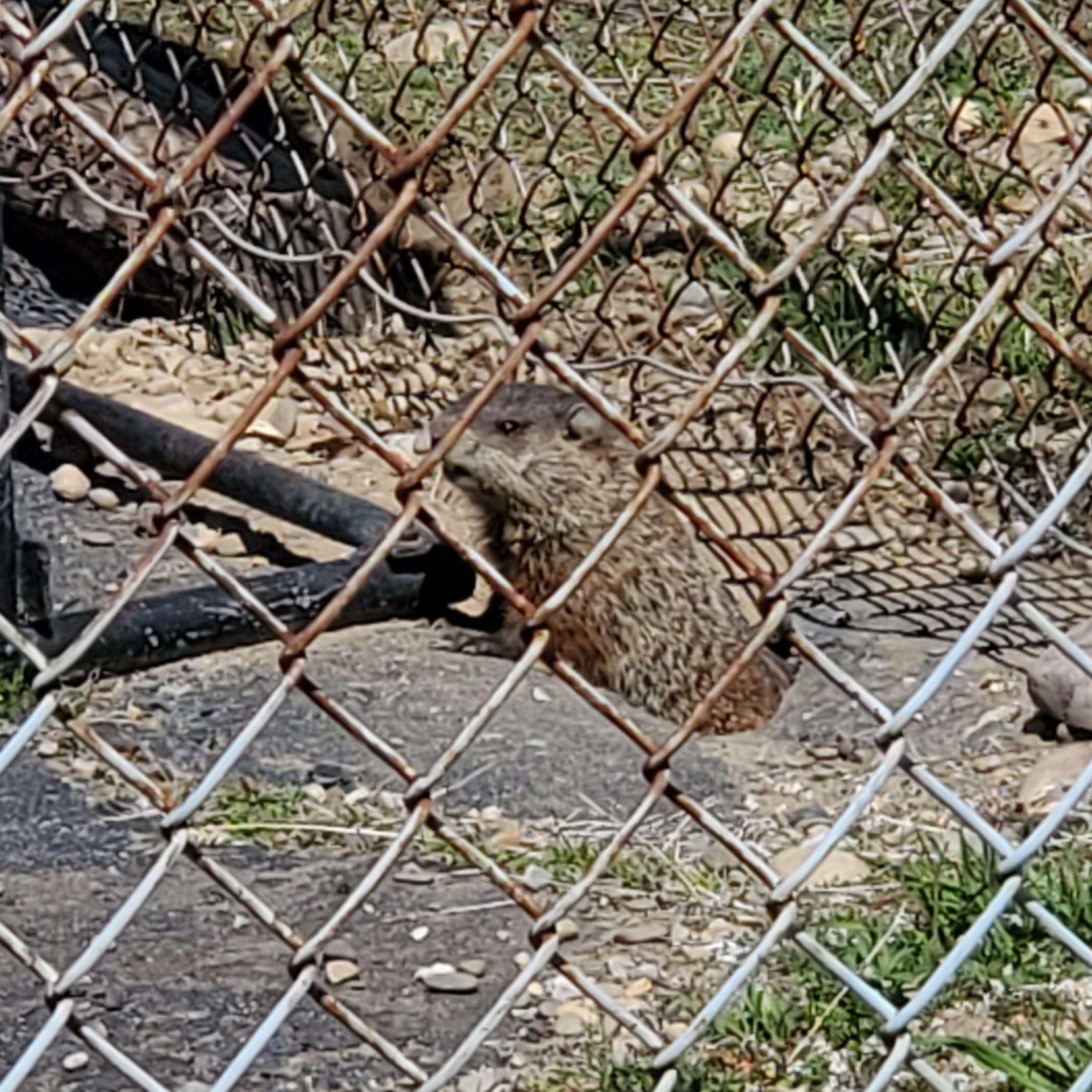 https://cdn.jasongaylord.com/images/2020/04/06/groundhog.jpg